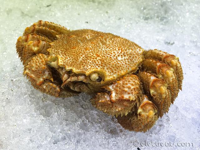 Hokkaido Hairy Crab  Hi there!