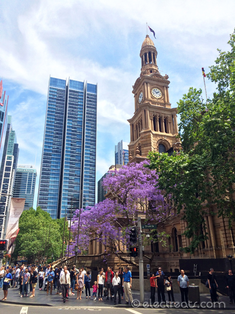 Sydney Town Hall in all its glory